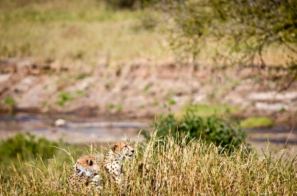 Tarangire National Park 284-32