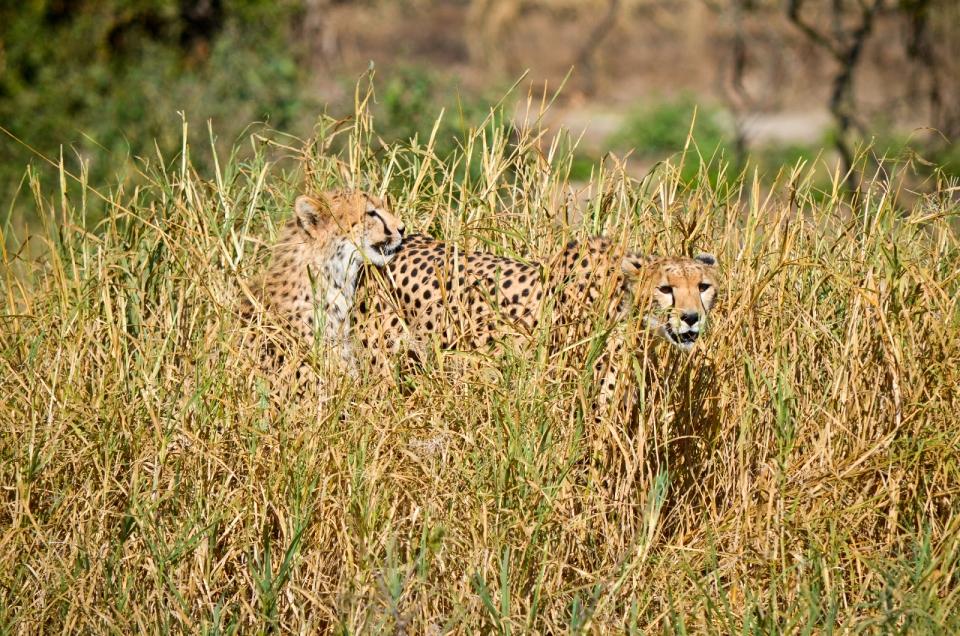 Tarangire National Park 309-37